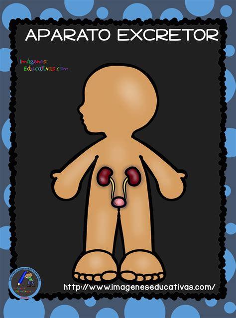 el cuerpo humano aparatos y sistemas para primaria 12