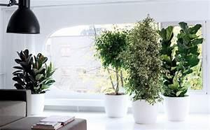 Robuste Zimmerpflanzen Groß : anspruchsvolles sortiment zimmerpflanzen lebensmittel praxis ~ Sanjose-hotels-ca.com Haus und Dekorationen