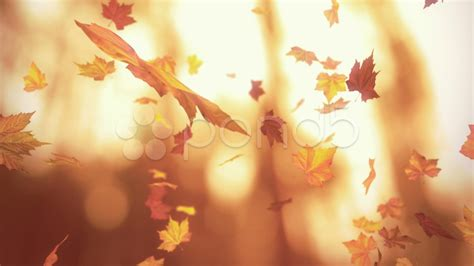 3d Falling Leaves Animated Wallpaper - falling autumn leaves looped 3d animation hi res 5118531