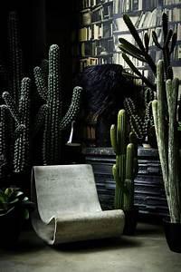 Plantes Grasses Intérieur : d corez avec les plantes grasses d 39 int rieur we love botanical interior plants ~ Melissatoandfro.com Idées de Décoration