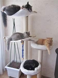 Arbre À Chat Pour Gros Chat : quel arbre chat choisir quel brosse forum ~ Nature-et-papiers.com Idées de Décoration