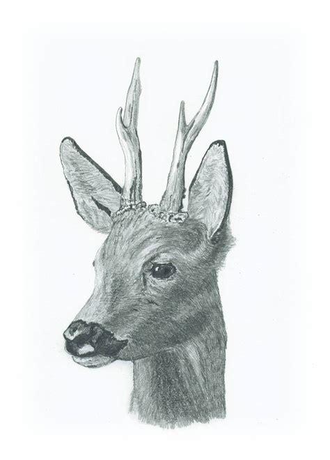 bild zeichnungen tiere von mosart bei kunstnet