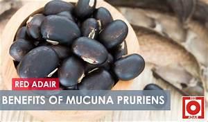 Mucuna Pruriens Benefits