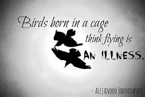 Bird Flying Quo... Short Fly Quotes