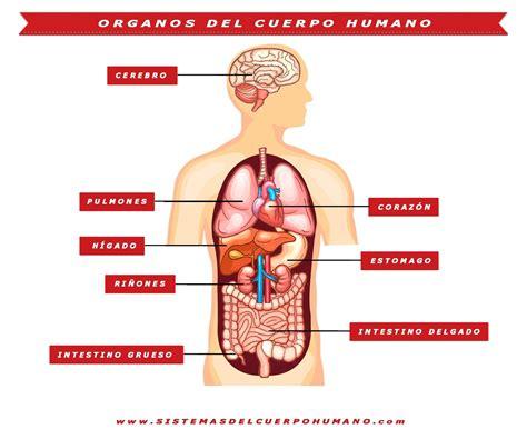 sistemas cuerpo humano aparatos funciones organos