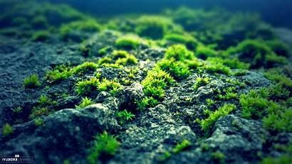 Moss Nature Rock Desktop Backgrounds Wallpapers Mobile