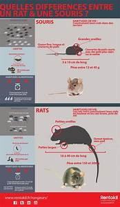 Crottes De Souris : rats et souris quelles diff rences stopnuisibles ~ Melissatoandfro.com Idées de Décoration