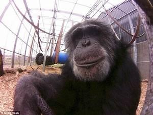 Chimpstagram: Primates pose for world's smallest fisheye ...