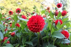 Free photo: Flower, Park, Nature, Flowers