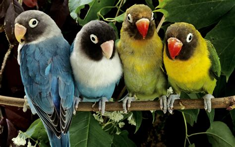 free scenery wallpaper includes 4 love birds makes one