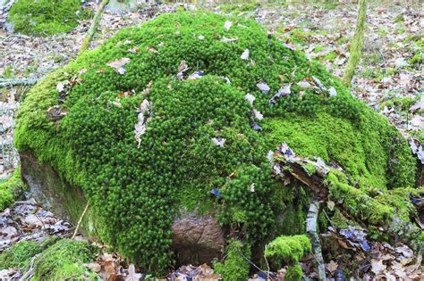 Different Types Of Moss  Learn About Moss Varieties For