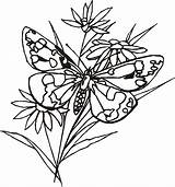 Coloring Pages Butterfly Simple Butterflies Cartoon Flower Cliparts Printable Sheet Library Clipart Getcoloringpages Colorir sketch template