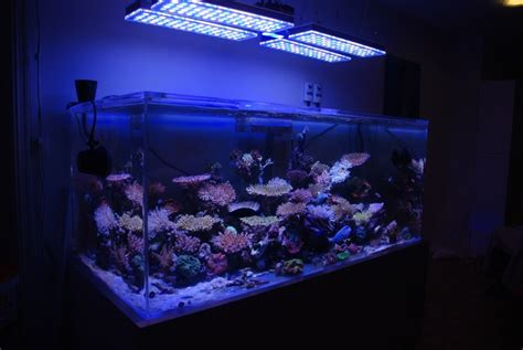 led lights for reef tank sps reef tank
