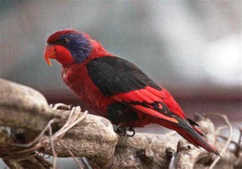 gambar burung  dilindungi
