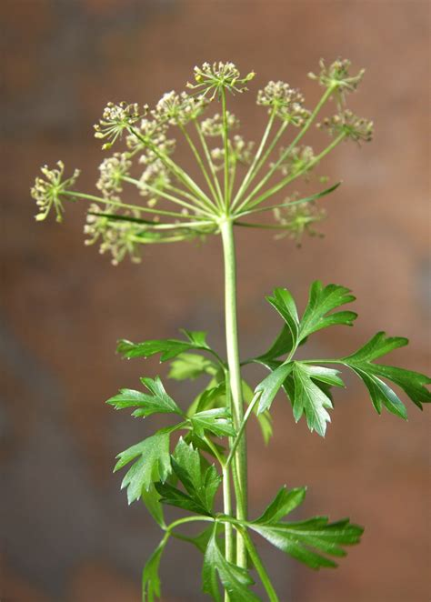 Garden To Grow Going Green Mill by Parsley