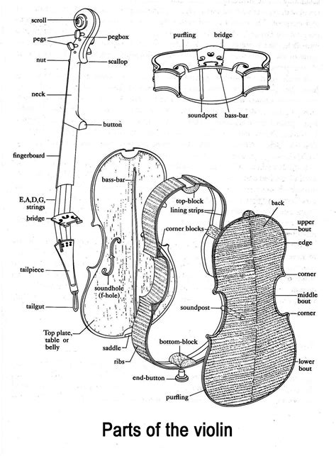 Parts Of Viola Diagram