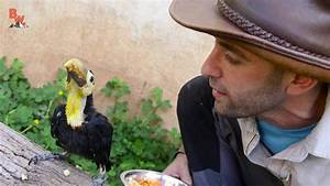 Rescued Baby Toucan Bird - YouTube