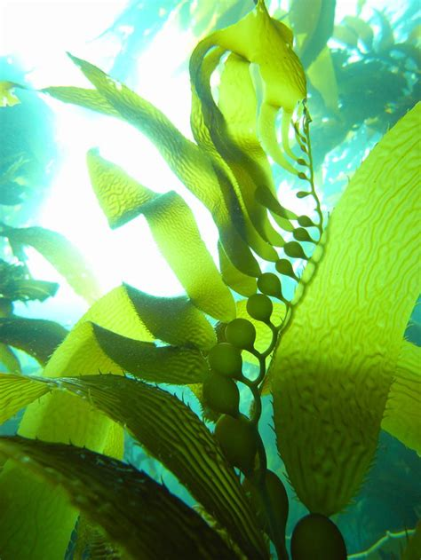 kelp holds fast  holds  national geographic society