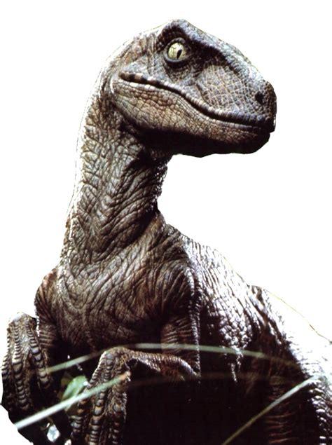 velociraptor png file png mart