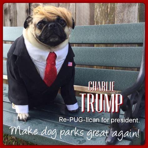 Pug Birthday Meme - funny pug dog meme pun lol pug dogs pinterest meme dog and animal