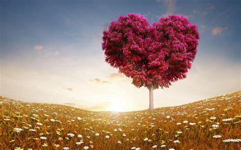 Love Heart Tree Fields Wallpapers