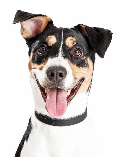 Dog Adopt Rescue Cutout Almost Save Today