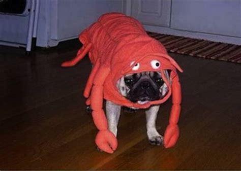 pug costumes   man