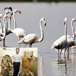 Dead flamingo to come alive at Sanjay Gandhi National Park ...