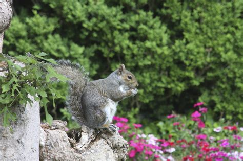 best 28 do squirrels eat bird seed what you can do