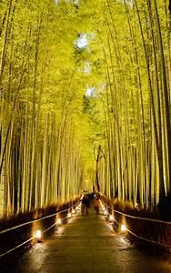 jeffrey friedl 39 s kyoto arashiyama bamboo forest