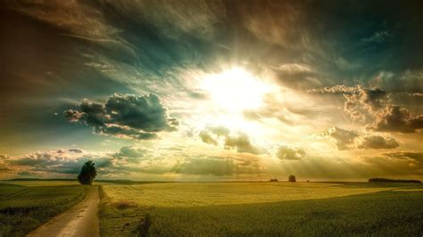 bright light   field hd desktop wallpaper