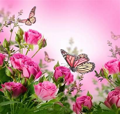 Flowers Butterflies Wallpapers Roses Blossom Wallpapersafari