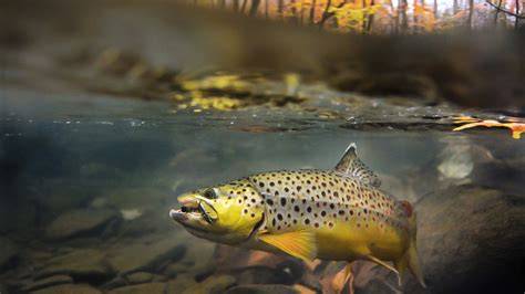 fly fishing wallpaper  images