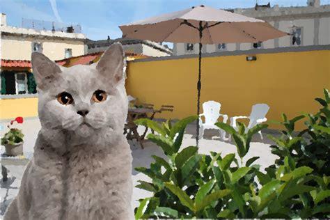 sul terrazzo i bisogni gatto sul terrazzo
