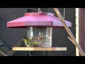 Vogelfutterspender Selber Bauen : vogelfutterflasche funnydog tv ~ Whattoseeinmadrid.com Haus und Dekorationen