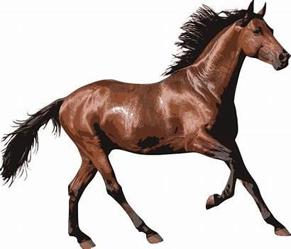 Clipart Horse Race Transparent Brown Webstockreview Stickpng
