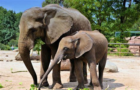 zoo nashville elephants seeks connecticut lawsuit three clarksvillenow personhood local