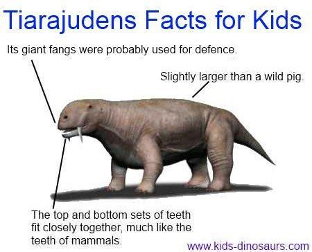 tiarajudens dinosaur facts  kids