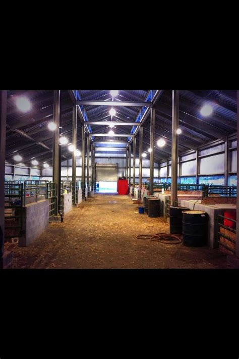 Steer Barn by Best 10 Cattle Barn Ideas On Stalls