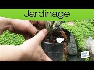 Rempoter Une Orchidee : jardinage rempoter une orchid e youtube ~ Mglfilm.com Idées de Décoration