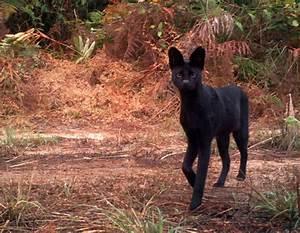 Wild Cats Pt 2: Serval • Lazer Horse