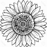 Sunflower Outline Drawing Simple Vector Drawings Sunflowers Draw Clipartmag Unique Paintingvalley Vectorified sketch template