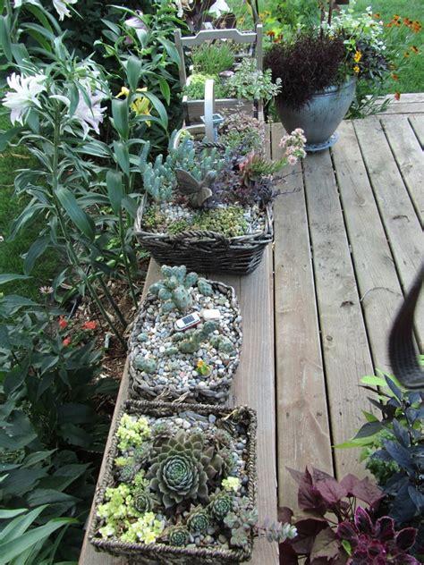 Cheesehead Gardening Miniature Container Gardens Fairy