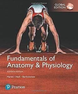 Human Anatomy  U0026 Physiology Laboratory Manual  Fetal Pig Version 12th Edition Marieb  U0026 Hoehn