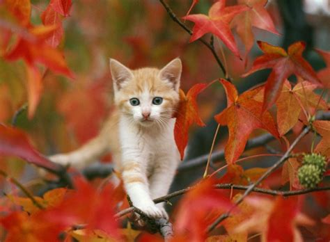 Fall Wallpaper With Animals - fall with animal android hd wallpapers 4025 amazing