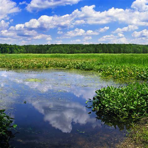 siege social habitat sar datasets wetlands measures wetlands overview