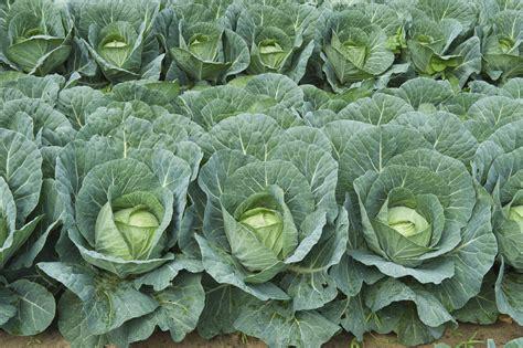 3phase Program For Growing Vegetables On Sandy Soils