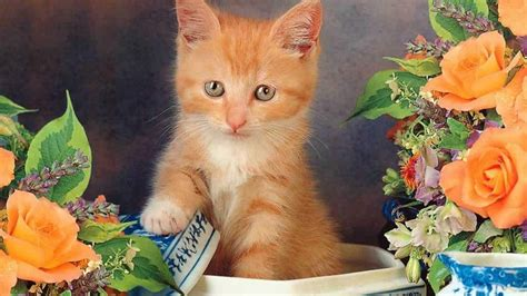 Free Cat Wallpapers For Desktop  Wallpaper Cave