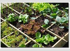 Child Vegetable Garden, Gardening with Kids, Gardening