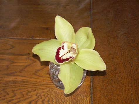 orchid 233 es culture en pot de verre